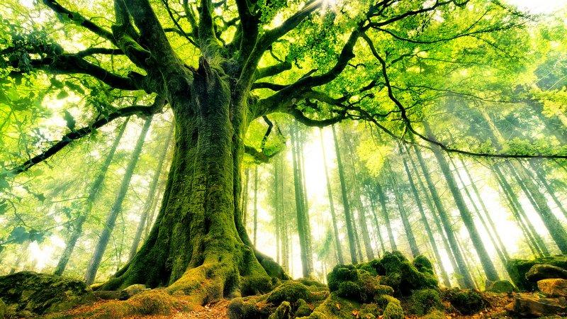 Ağaçlar Birbirleri İle İletişim Kurabilir Mi?