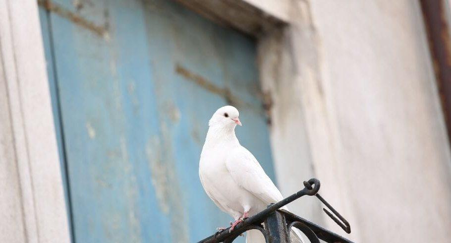 Kuşların Balkona Gelmemesi İçin Ne Yapılır?kona Gelmemesi
