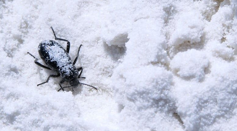Böcekler Kışın Nereye Kayboluyor?