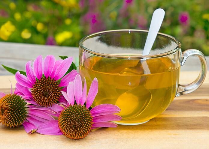 Ekinezya Çayı Nasıl Yapılır? Ekinezya Çayının Faydaları Nelerdir?