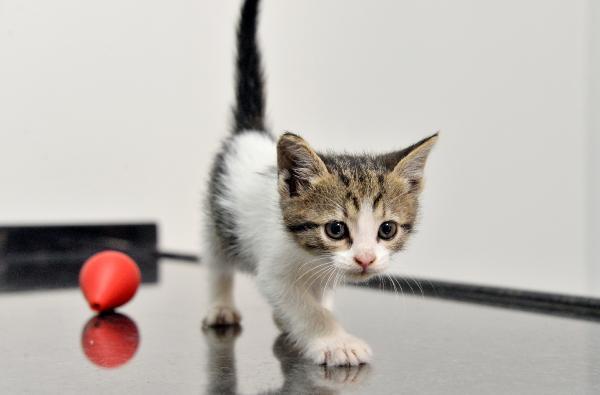 Yavru Kedi Ne Zaman Anneden Ayrılır?