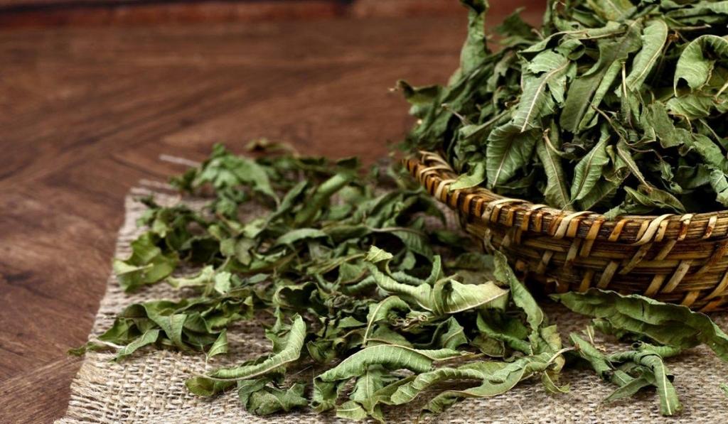 Şifa Deposu Melisa Çayı