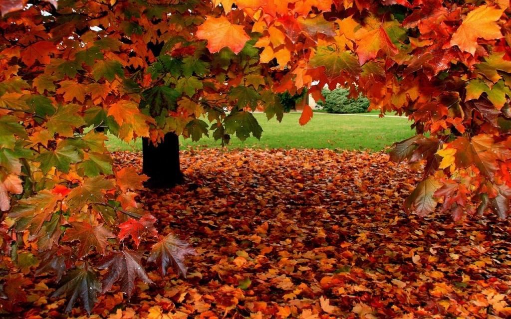 Sonbaharda Yapraklar Dökülür?