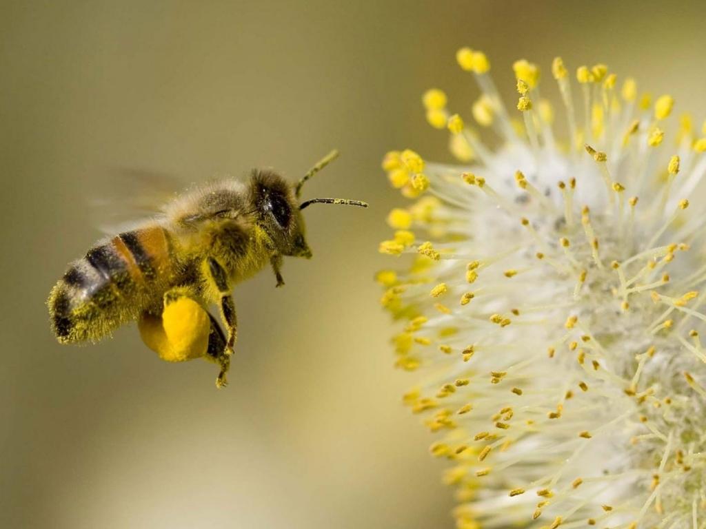 Arı poleni faydaları nelerdir?