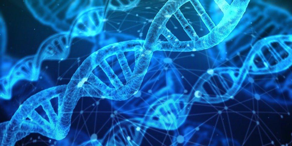 Genetik Baskınlık Nedir Ve Nasıl Çalışır?